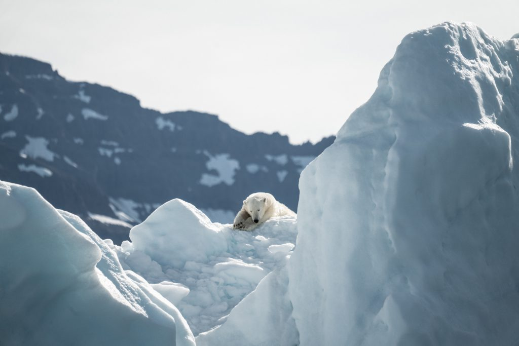 Wildlife destinations - Northwest Passage