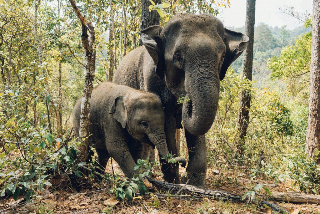 Wildlife destinations - Okavango Delta