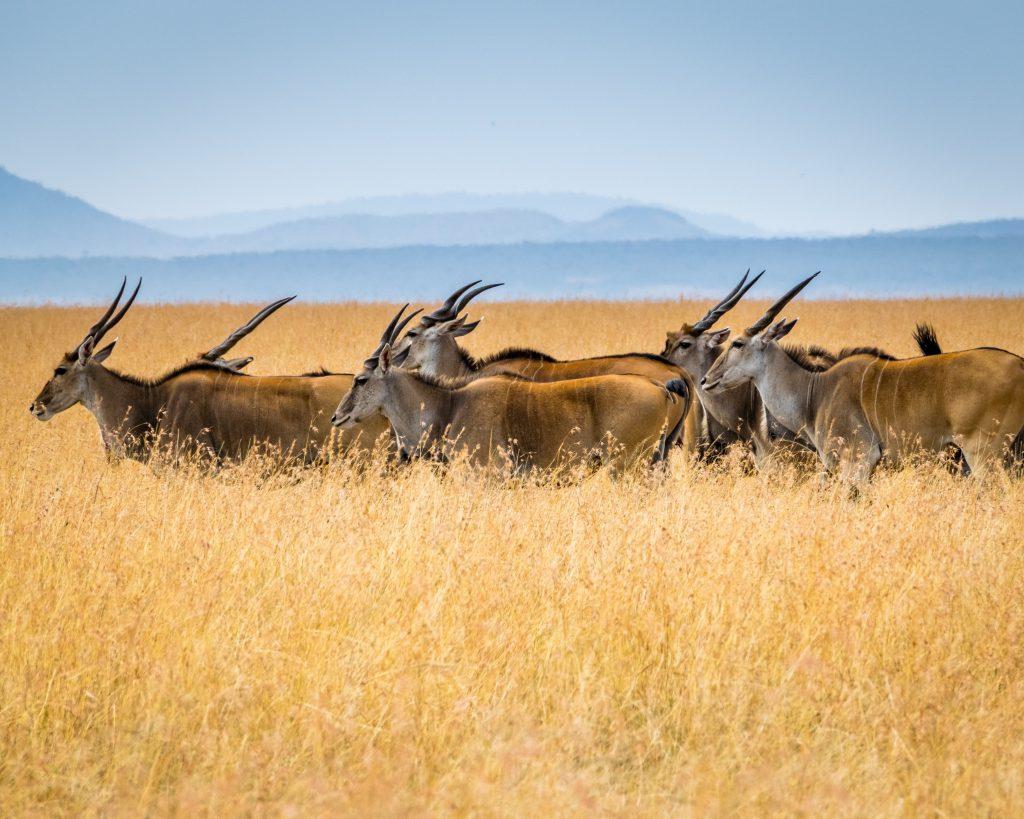 Wildlife destinations - Kruger National Park