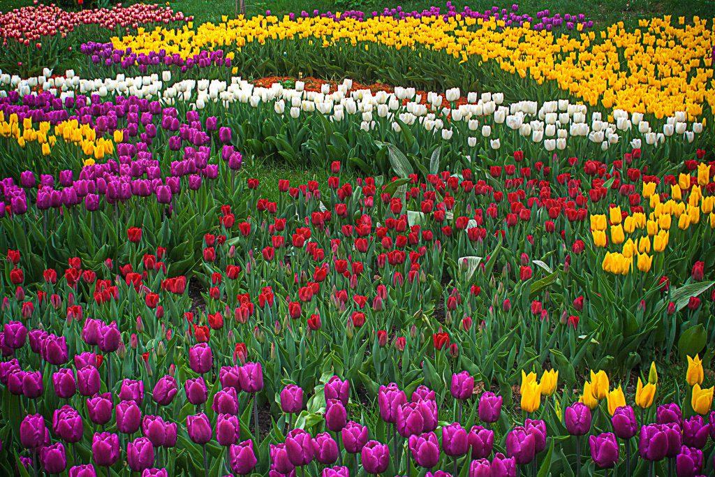 Beautiful gardens Keukenhof Gardens