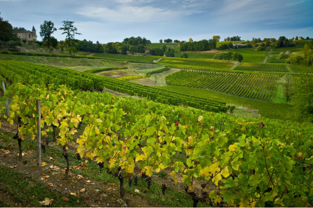 Good-value Bordeaux - St Emilion vineyard